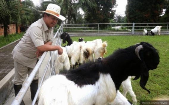 Image result for prabowo dan kambingnya